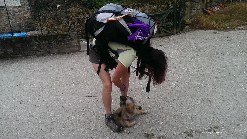El cachorro de Congarna